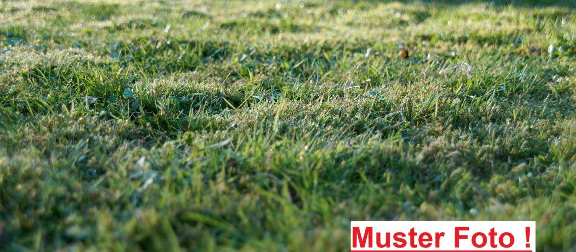 grass-905179_1920_1